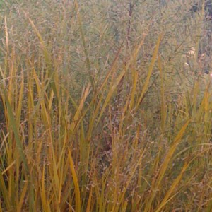 Landscape Services: Gillian Ashley Garden Architecture
