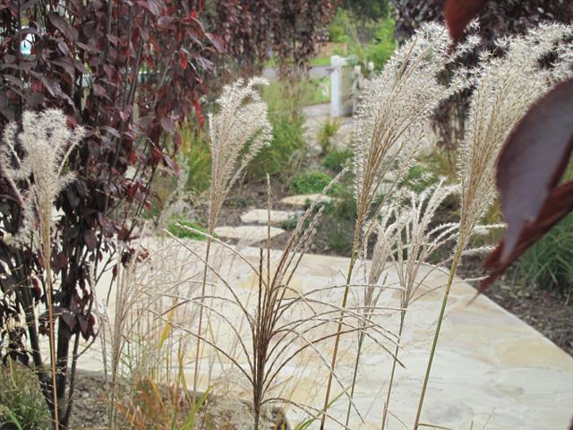 Burwood grasses
