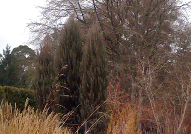 wintertreescolours